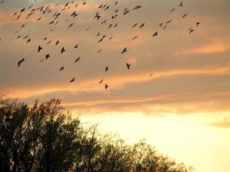 latać ptaków obraz stock