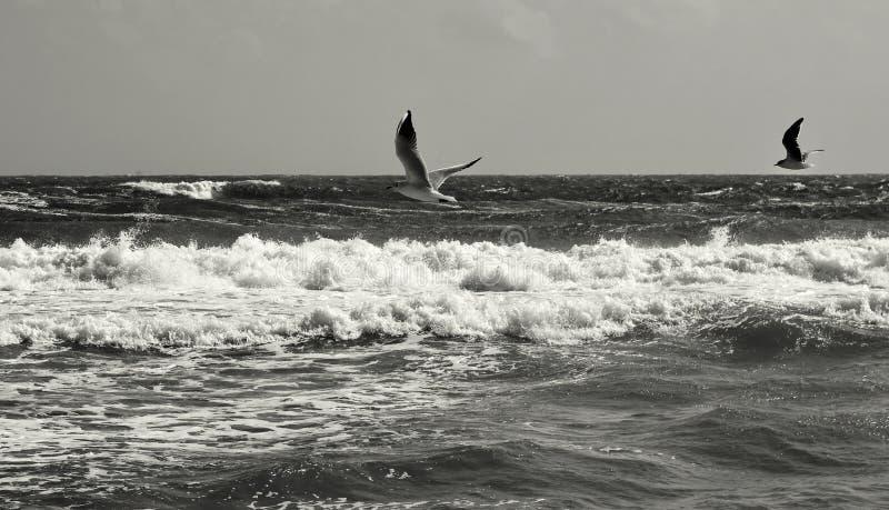 latać ptaków zdjęcia royalty free