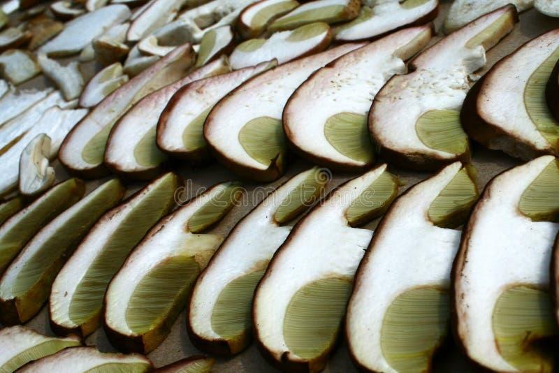 Lata cep pieczarki borowika reticulatus kapelusz pokrajać w szczególe fotografia stock