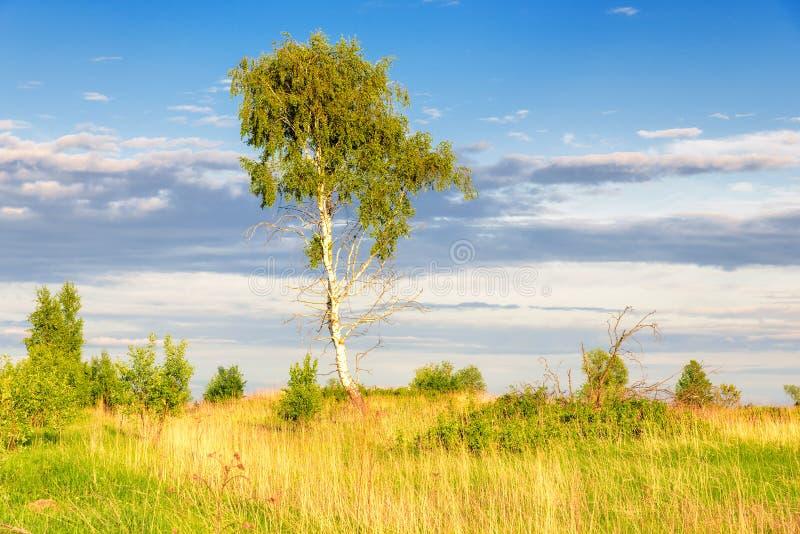 Lata drzewo pod niebieskim niebem fotografia royalty free