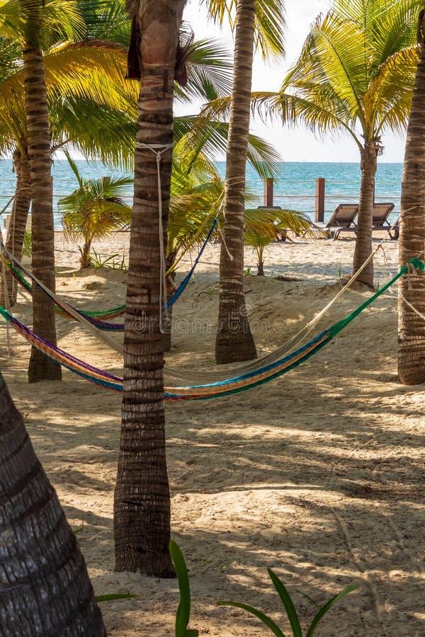 Lata hängmattor på den sandiga stranden arkivfoto