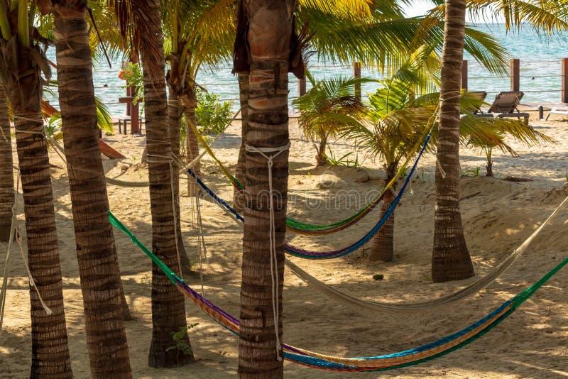 Lata hängmattor på den sandiga stranden arkivbilder