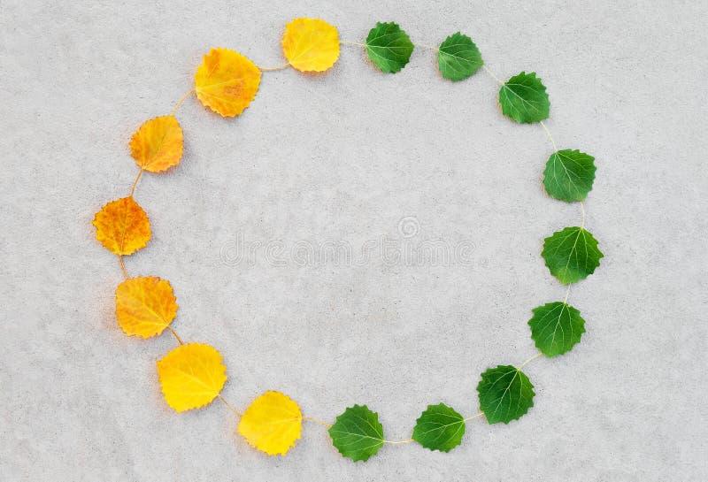 Lata i jesieni liści okrąg obraz stock