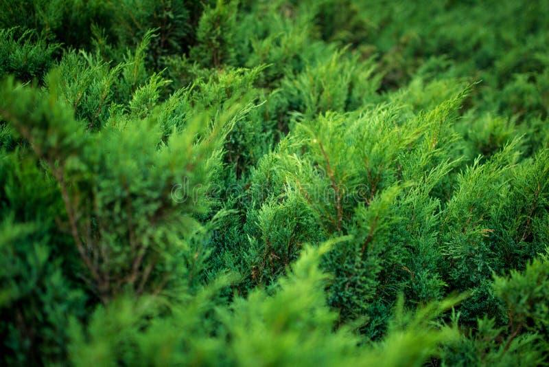 Lata i zieleni liście zdjęcia royalty free