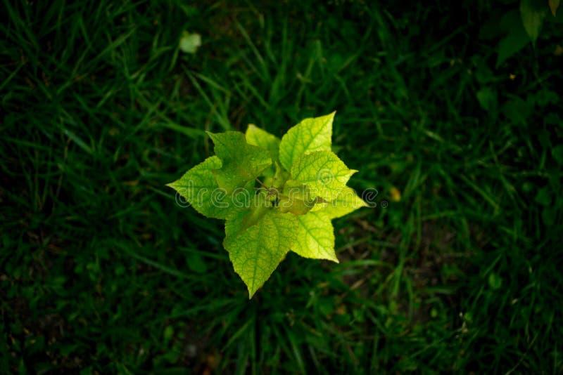 Lata i zieleni liście zdjęcie royalty free