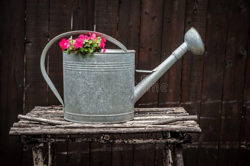 Lata molhando da antiguidade das flores fotos de stock