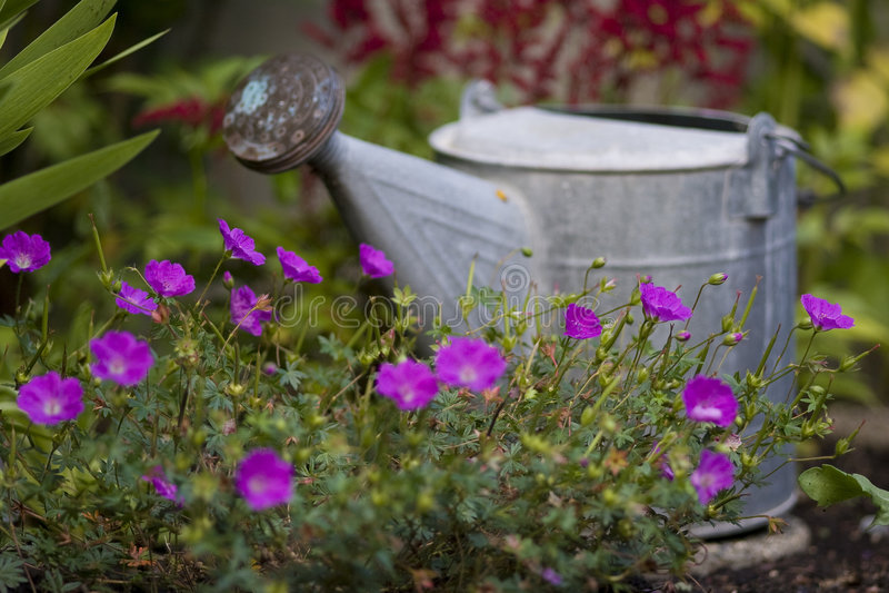 Lata molhando no jardim imagem de stock