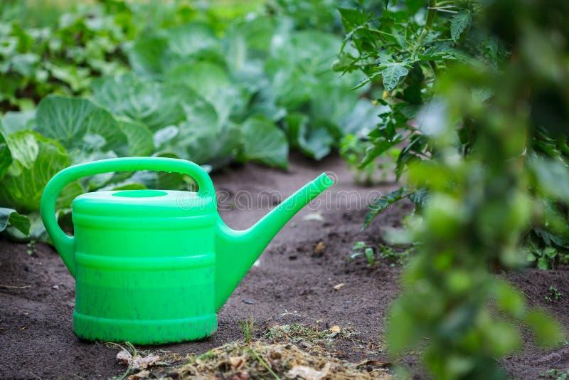 Lata molhando plástica verde no jardim imagens de stock royalty free