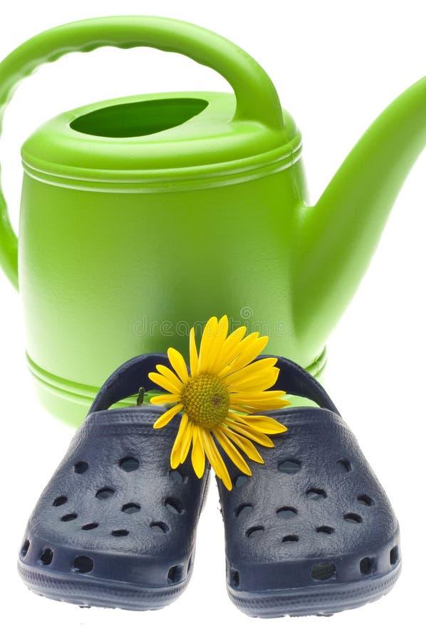 Lata molhando verde vibrante com margarida amarela fotografia de stock royalty free
