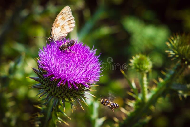 lata od kwiatu kwitnąć rzadkiego pollen i zbierać fotografia royalty free