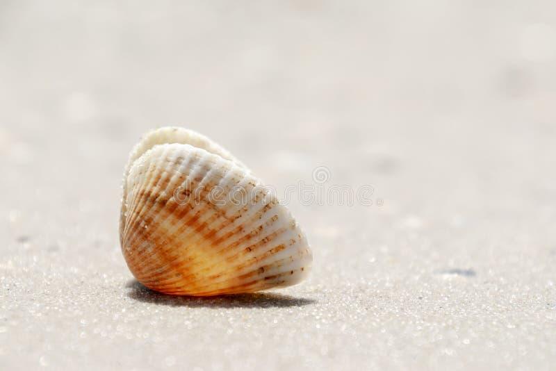 Lata pojęcie z Shell na piaskowatej plaży Naturalny t?o zdjęcia royalty free