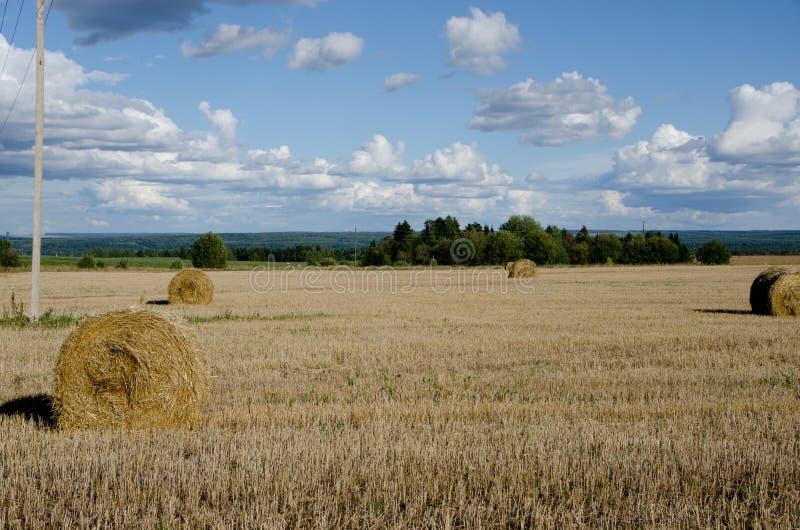 Lata pole podczas hayfields obraz royalty free