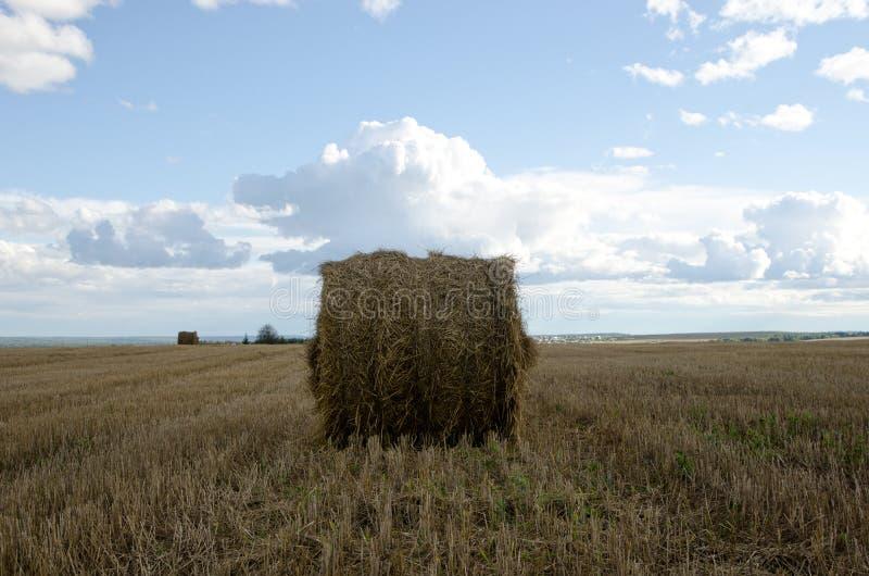 Lata pole podczas hayfields zdjęcie royalty free