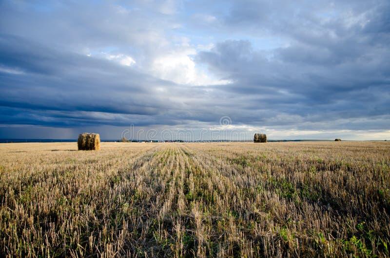 Lata pole podczas hayfields zdjęcia stock