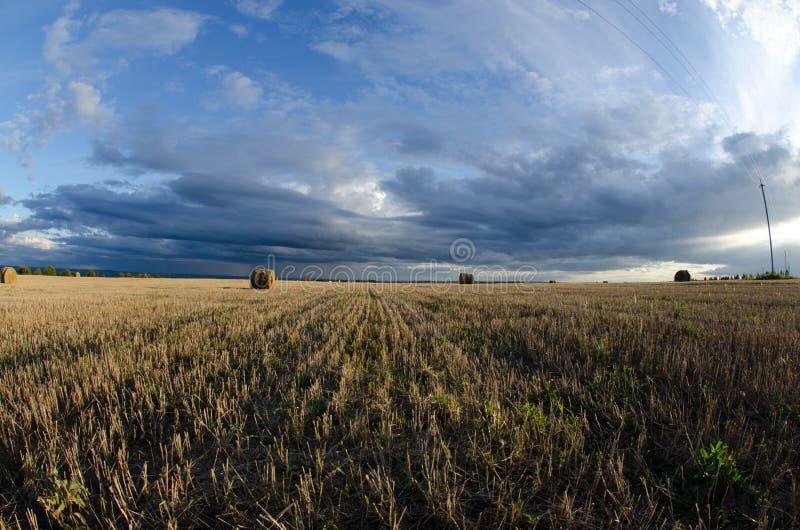 Lata pole podczas hayfields zdjęcia royalty free