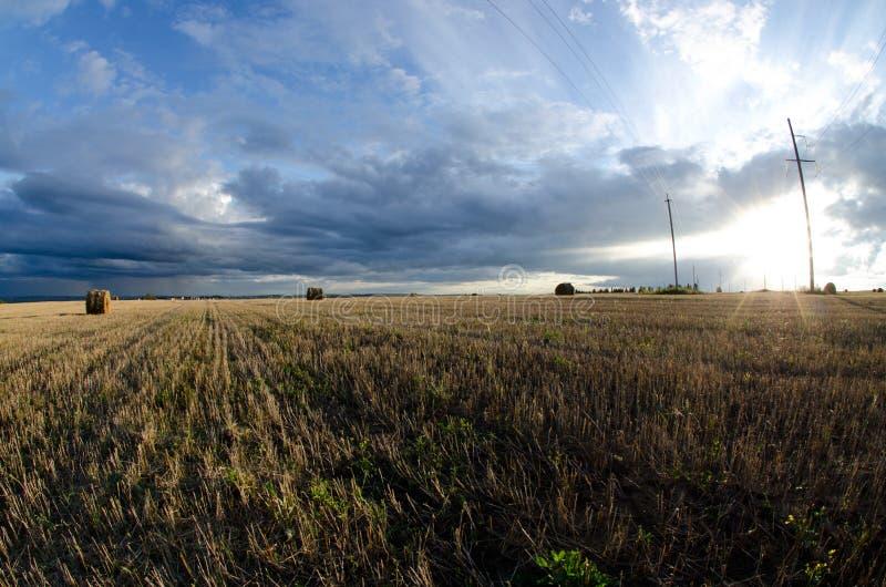 Lata pole podczas hayfields fotografia stock