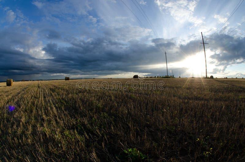 Lata pole podczas hayfields obraz stock