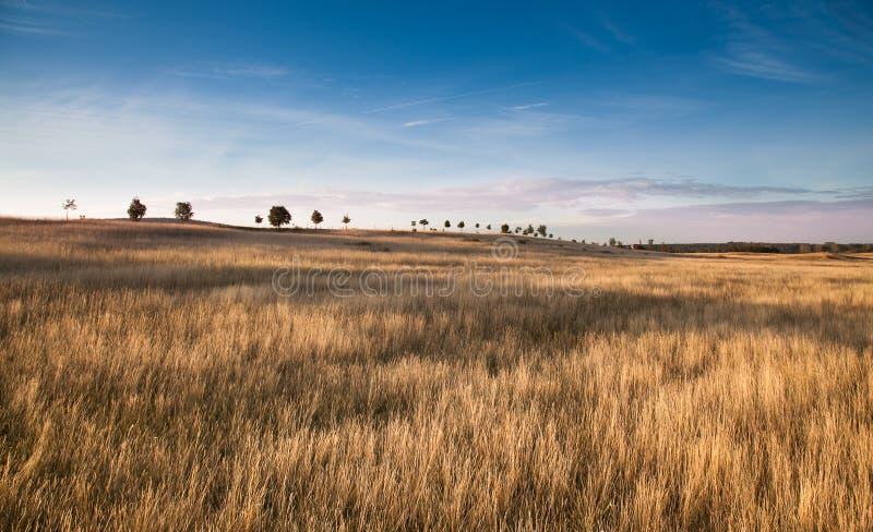 Lata pole z trawą i niebieskim niebem fotografia stock