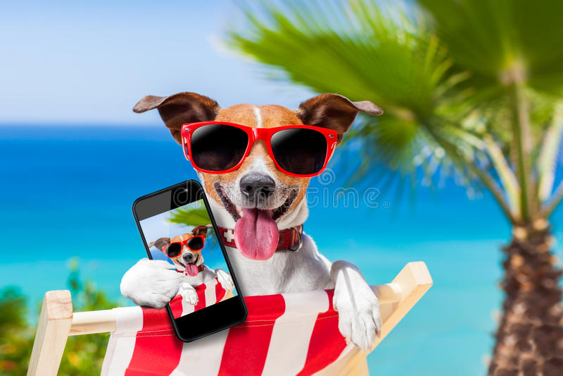 Lata selfie pies zdjęcie royalty free