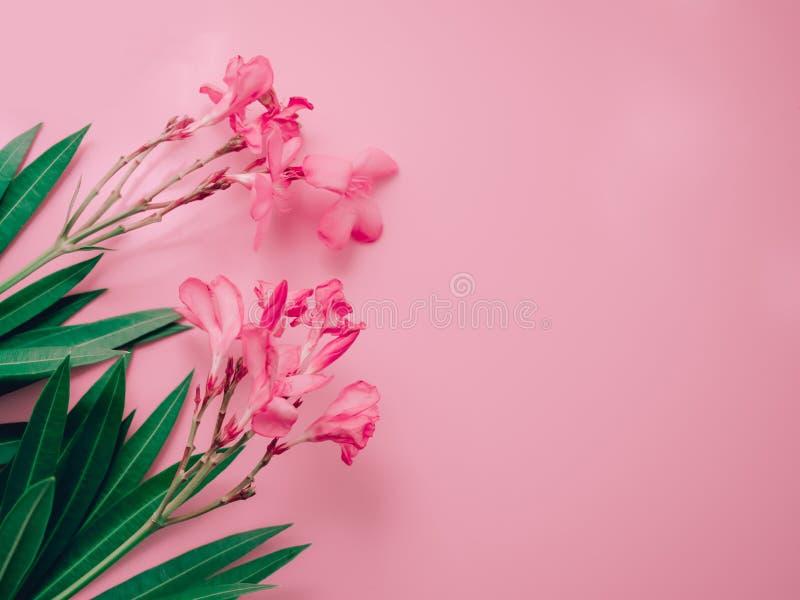 Lata tła pojęcie z różowym oleandrowym tropikalnym kwiatu arr obrazy royalty free