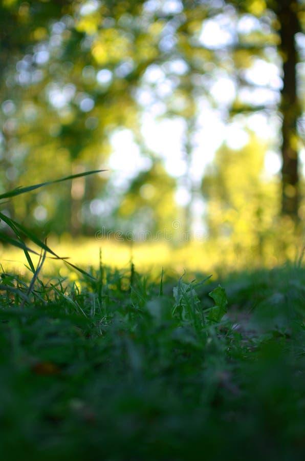 Lata tła wizerunek - łąka i trawa fotografia stock
