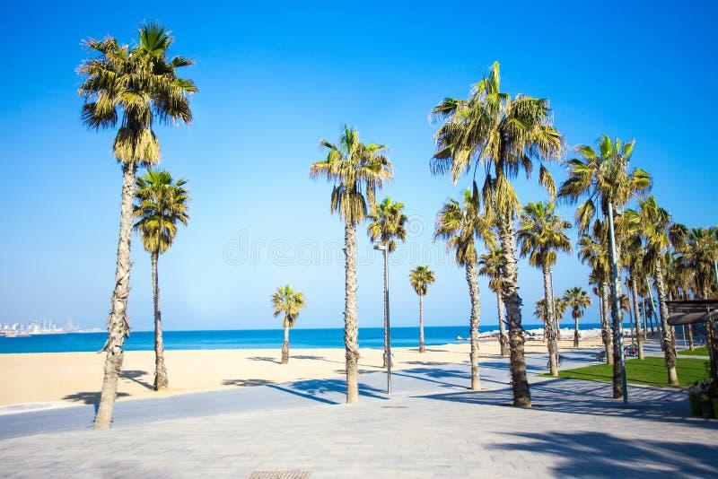 Lata tło deptak, plaża i palmy w Barcelona -, obrazy royalty free