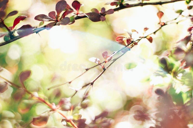 Lata tło, zielenie, rośliny przez światła, makro- fotografia royalty free