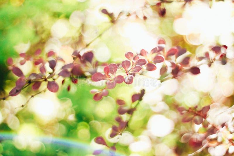 Lata tło, zielenie, rośliny przez światła, makro- fotografia stock
