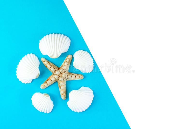 Lata tropikalny urlopowy t?o Rozgwiazda otaczająca białymi seashells na błękitnym tle Odbitkowa przestrze?, odg?rny widok obrazy stock