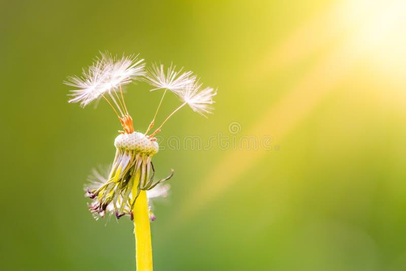 Lata zbliżenia łąka i kwiaty jaskrawy krajobraz Inspiracyjny natura sztandaru tło obraz stock