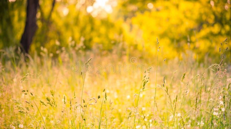 Lata zbliżenia motyl w zmierzchu świetle jaskrawy krajobraz Inspiracyjny natura sztandaru tło obrazy royalty free