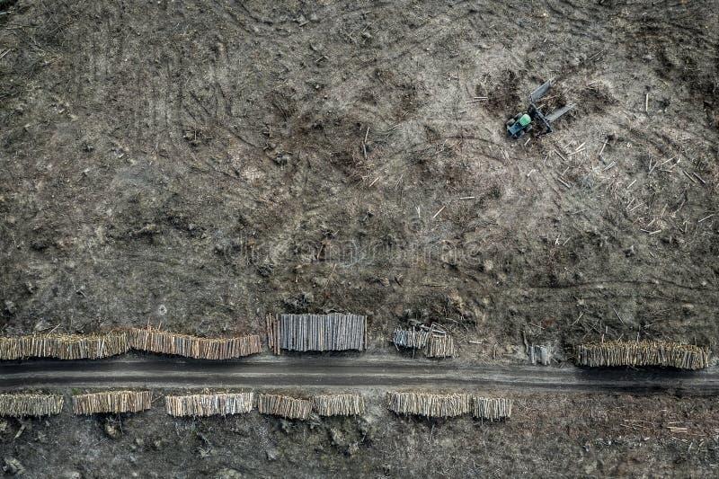 Latający nad okropny wylesienie, zniszczony las dla zbierać, Polska obraz royalty free