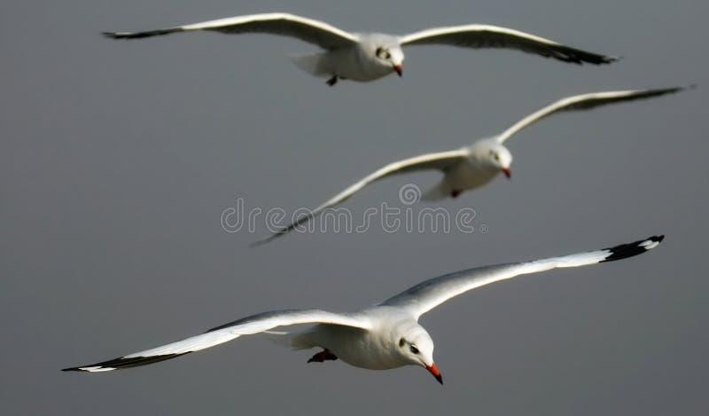 latająca wysokość zdjęcie royalty free