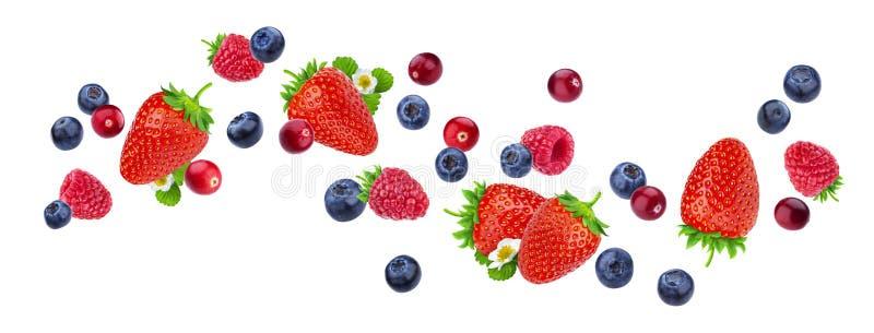 Latające jagody odizolowywać na białym tle z ścinek ścieżką, różne spada dzikie jagodowe owoc, kolekcja obraz royalty free