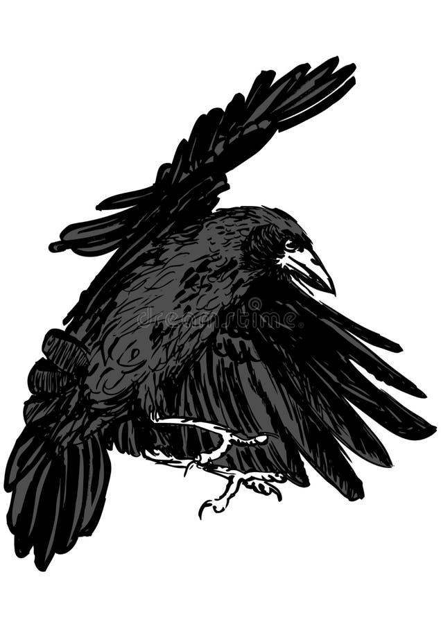 latający gawron ilustracja wektor