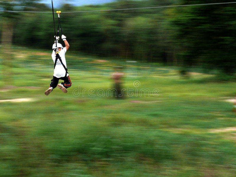 latający lis zdjęcie royalty free