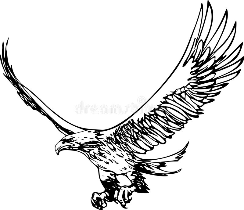 latający orzeł royalty ilustracja