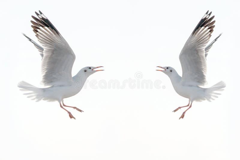 Latający piękni seagulls w mieszkanie stylu odizolowywającym na białych półdupkach zdjęcie royalty free