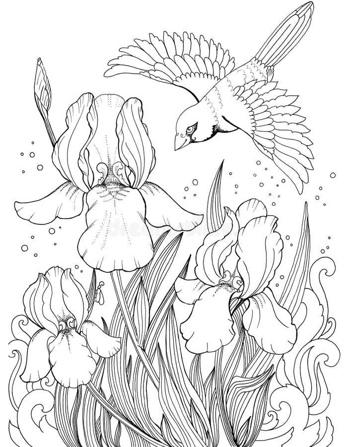 Latający ptak nad irysowym kwiatem, rysować kwiaty i ptaki, ilustracja wektor