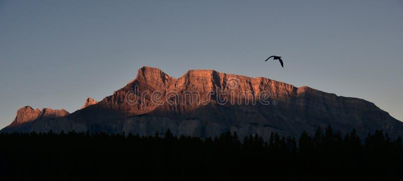Latający ptak nad Tunelowa góra podczas wschód słońca w Skalistych górach, Banff park narodowy, Alberta, Kanada zdjęcia stock