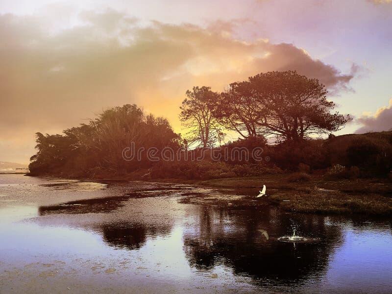 Latający ptak przy laguną obraz stock