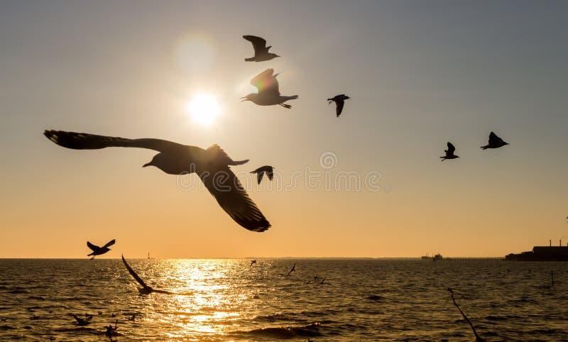 Latający ptaki zdjęcie royalty free