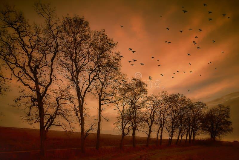 Latający ptaki Jesień wieczór krajobraz zdjęcie royalty free