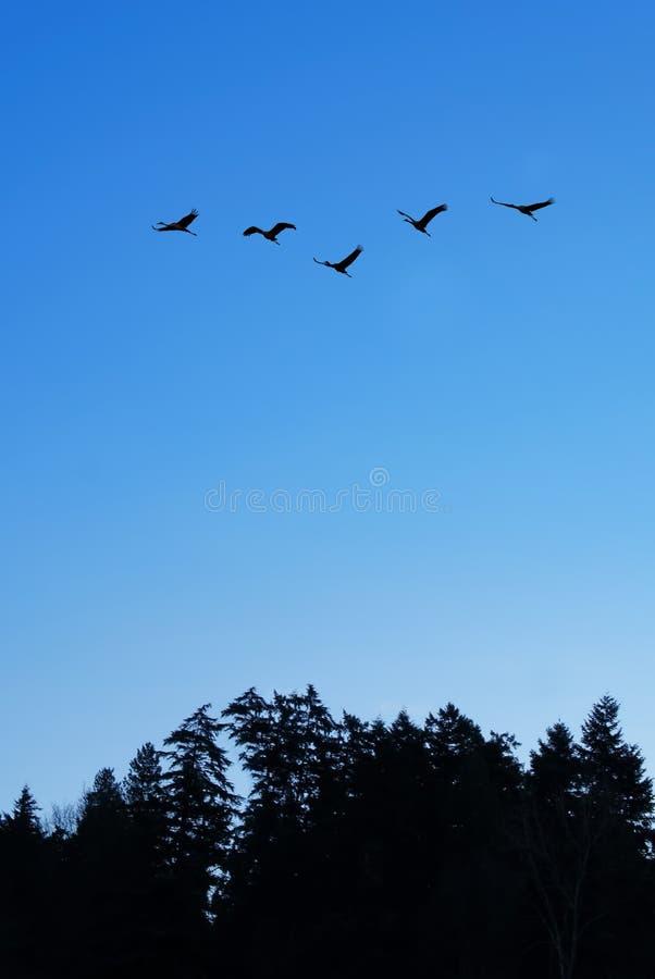 Latający ptaki nad niebieskiego nieba tła vertical wizerunkiem obraz royalty free
