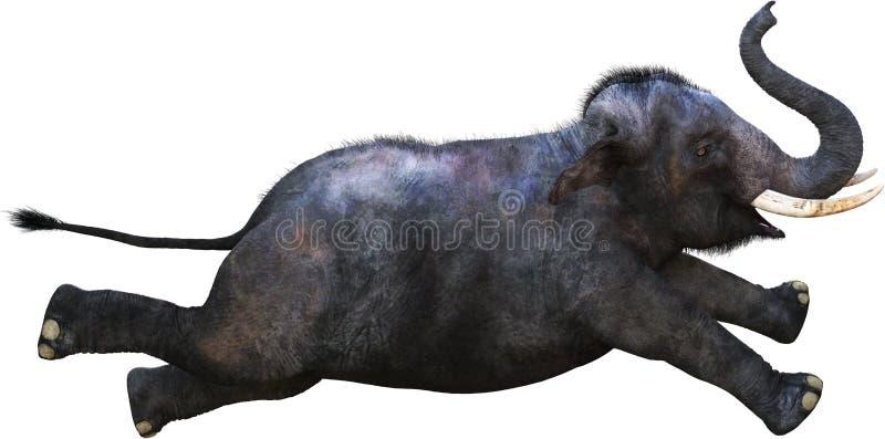 Latający Słoń, Zwierzę Dzikie, Wyizolowane fotografia royalty free