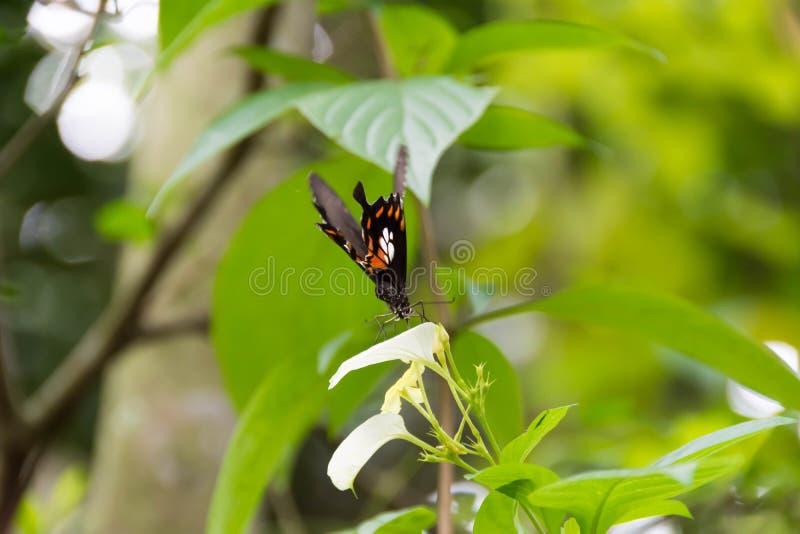 Latających ruch plamy Motylich mrowie żółty kwiat, selekcyjny foc obrazy royalty free