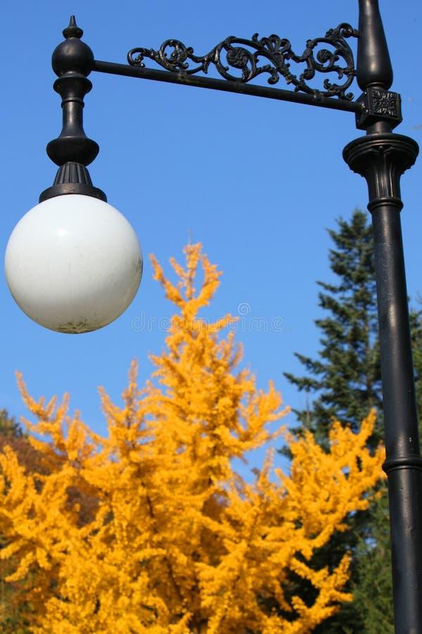 Latarnia uliczna w parku na tle żółtej zieleni drzewa fotografia stock