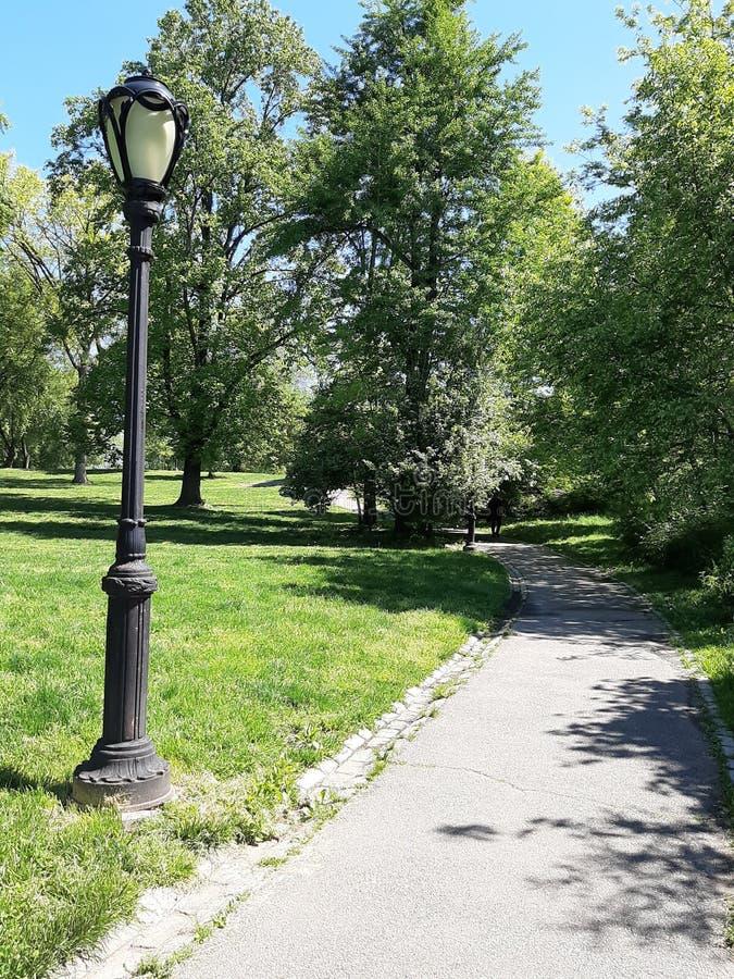 Latarnia wśród drzew w central park, na pogodnym wiosna dniu fotografia royalty free