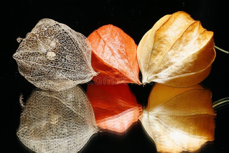 latarniowe chińskie owoców zdjęcie stock