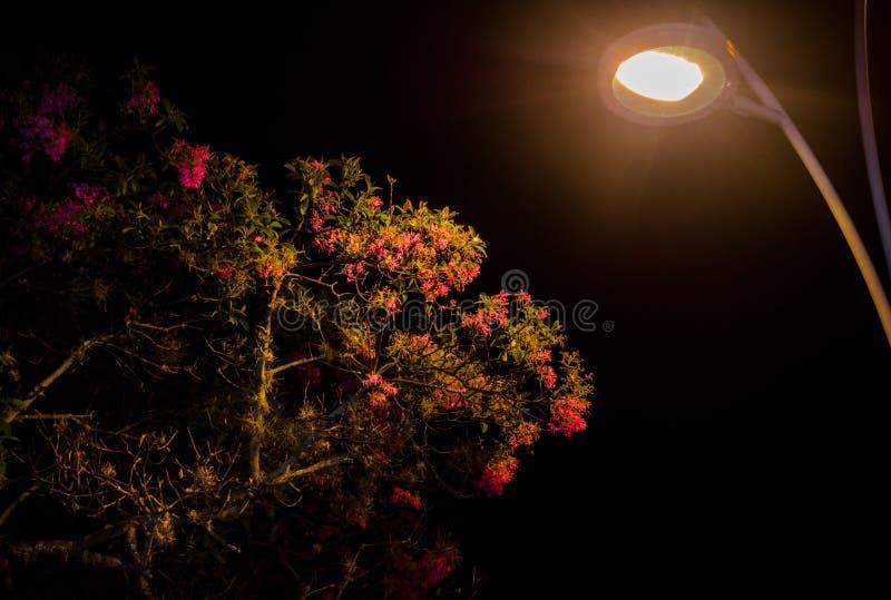 Latarniowy iluminujący drzewa zdjęcie royalty free